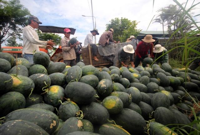 Thư kêu gọi hỗ trợ nông dân Quảng Nam tiêu thụ dưa hấu