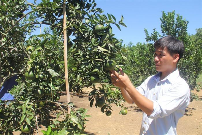 Từ vùng đất hoang, chàng trai trẻ Quảng Nam biến thành vườn cây trái thu tiền tỷ